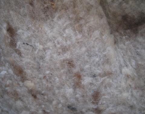 Semaine 49 – La laine de mouton